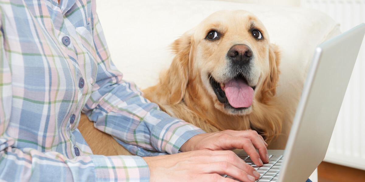 pet insurance agency provider in framingham ma