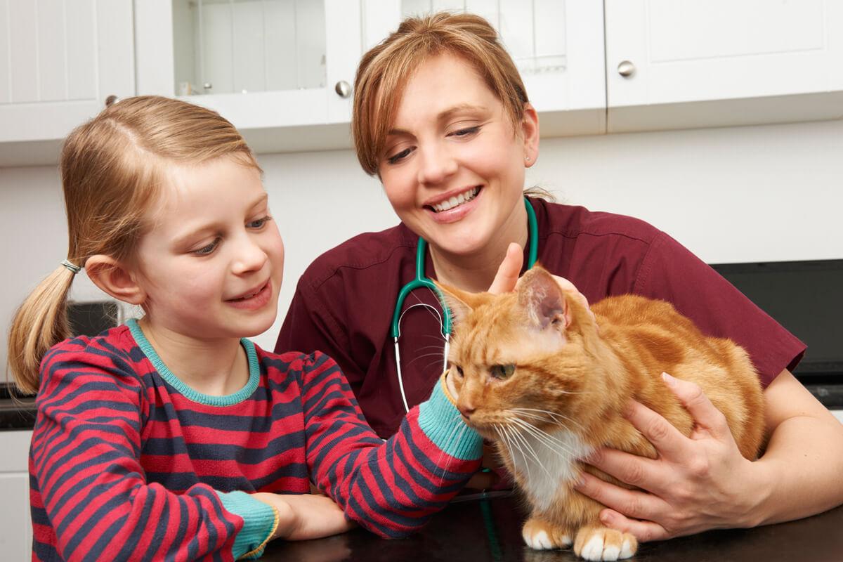 pet insurance in framingham ma